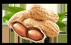peanut-home-focus small